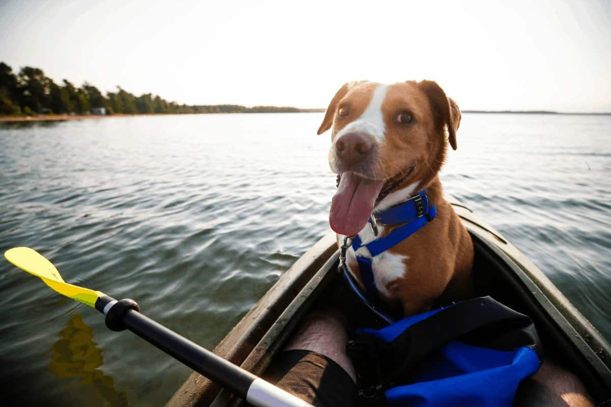 pros and cons of sit on top kayak